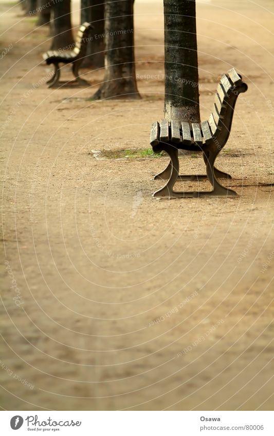 Tree Calm Loneliness Street Relaxation Autumn Sadness Lanes & trails Sand Sleep Sit Gloomy Multiple Break Bench Asphalt