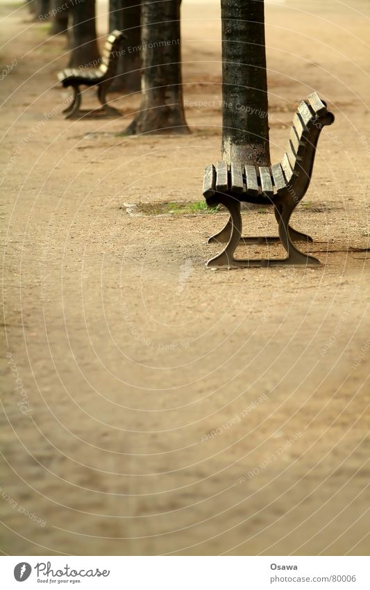 Tree Calm Loneliness Street Relaxation Autumn Sadness Lanes & trails Sand Sleep Sit Gloomy Multiple Break Bench Asphalt