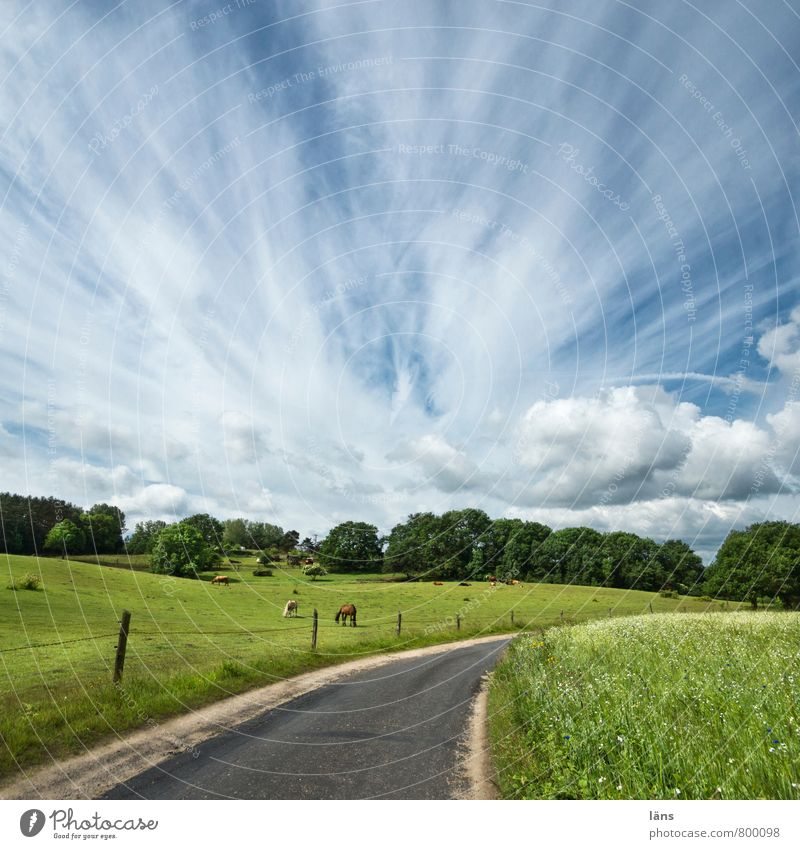 hinterland Landscape Sky Clouds Summer Beautiful weather Tree Wild plant Meadow Field Hill Street Animal Horse Group of animals Relaxation Nature