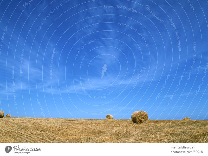 (agricultural) economy Pitchfork Flash in the pan Freedom Clouds Air Celestial bodies and the universe Tree Grass Agriculture Breathe Tree trunk Pasture