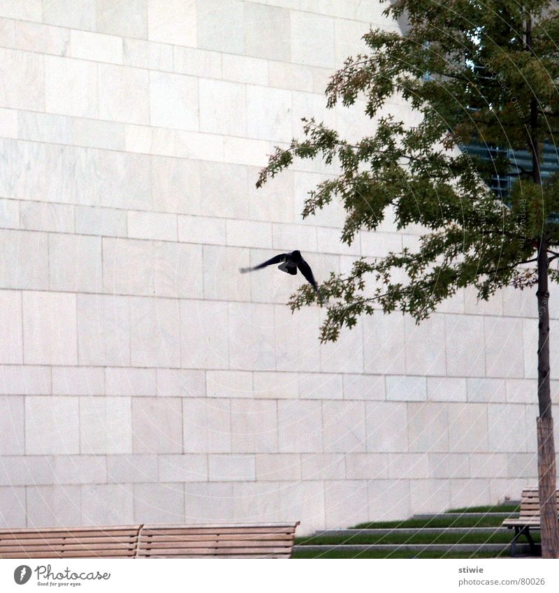 Tree Wall (building) Wall (barrier) Bird Flying Modern Wing