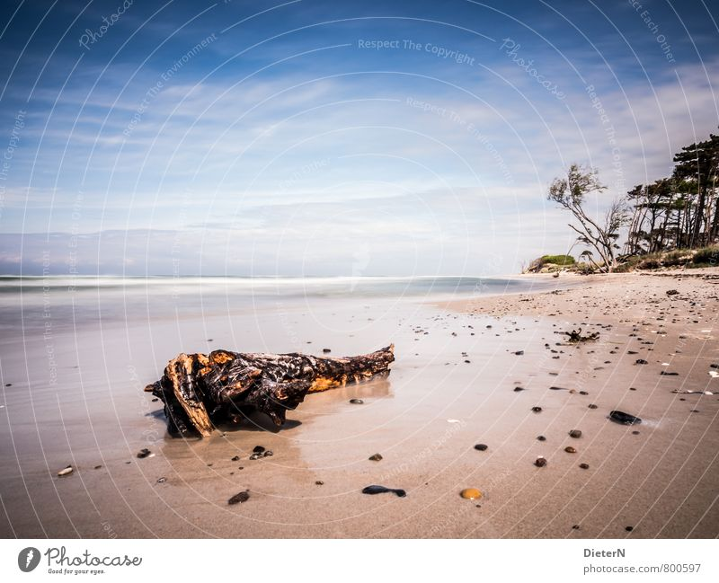 aground Beach Ocean Waves Sand Water Clouds Horizon Tree Coast Baltic Sea Blue Yellow White Darss Western Beach Flotsam and jetsam Tree trunk Colour photo