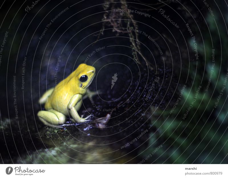 worm's-eye view Plant Animal Yellow Frog Small Nature Colour photo Exterior shot Detail Day Worm's-eye view