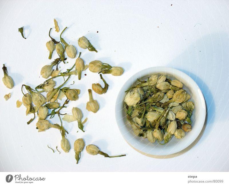 White Tea China Tea plants Original Chinese Primordial Vegetarian diet Jasmine Tea caddy Tea culture