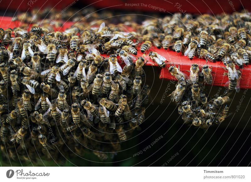 Group feeling, I guess. Nature Animal Bee Flock Beehive Wood Dark Simple Natural Red Black Emotions Attachment Group of animals Suspended Black & white photo