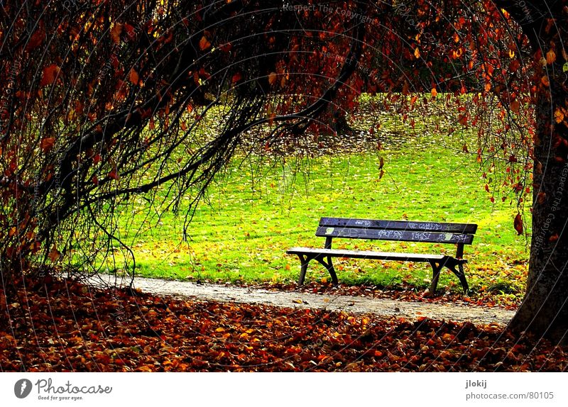 Nature Green Tree Leaf Relaxation Environment Meadow Graffiti Warmth Autumn Grass Wood Lanes & trails Garden Bright Park