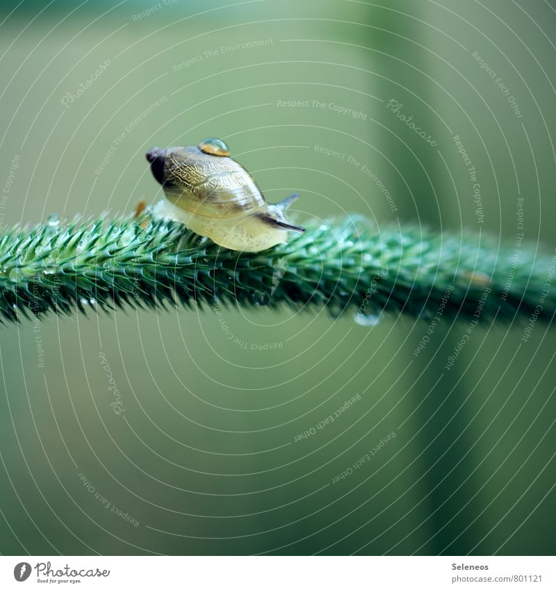 pearl Environment Nature Animal Plant Meadow Field Wild animal Snail 1 Near Wet Green Love of animals Drops of water Colour photo Close-up Detail
