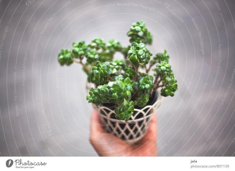 houseplant Feminine Hand Plant Foliage plant Pot plant Succulent plants Houseplant Esthetic Colour photo Exterior shot Neutral Background Day