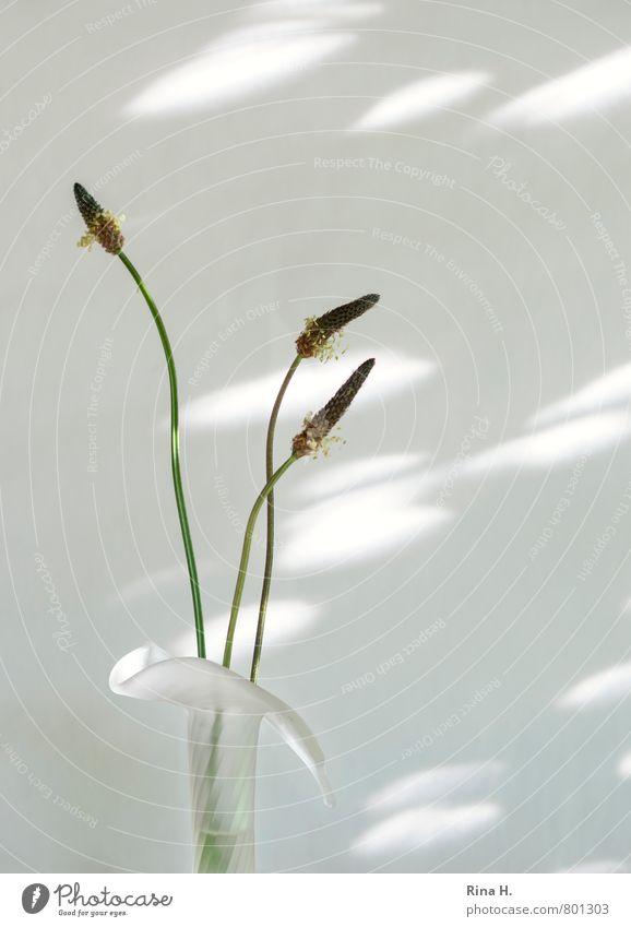 White Style Bright Elegant Esthetic Simple Stalk Still Life Ease Seed Vase Wild plant To dry up