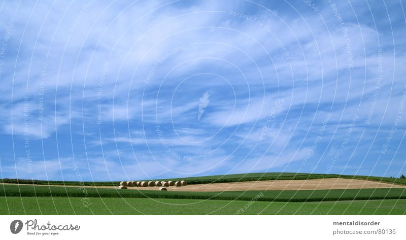 Sky Blue Vacation & Travel Green Tree Clouds Nutrition Meadow Food Grass Freedom Air Field Large Trip Circle