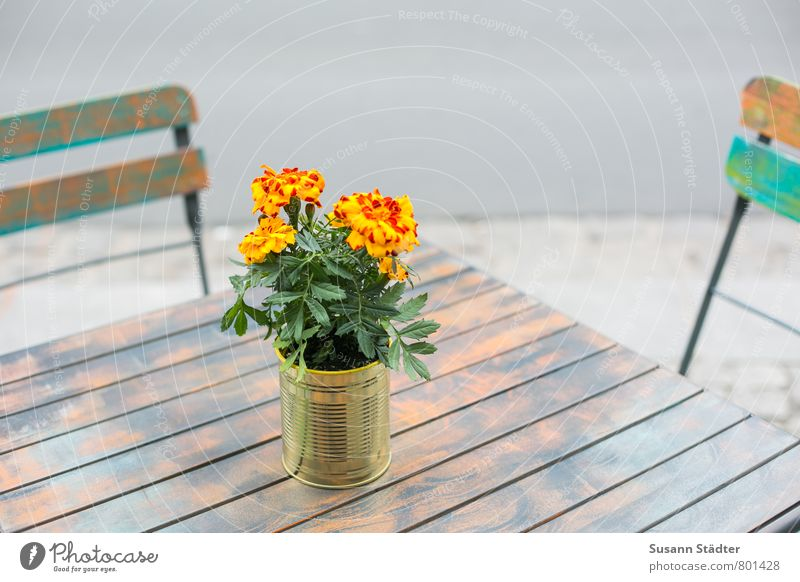 Sit Table To enjoy Chair Café Seating Wooden table Summery Flowerpot Meeting point Wooden chair