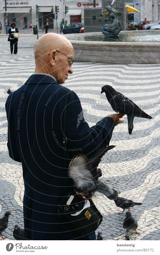 Man Vacation & Travel Trust Pigeon Belief Marketplace Feeding Lisbon Whisper