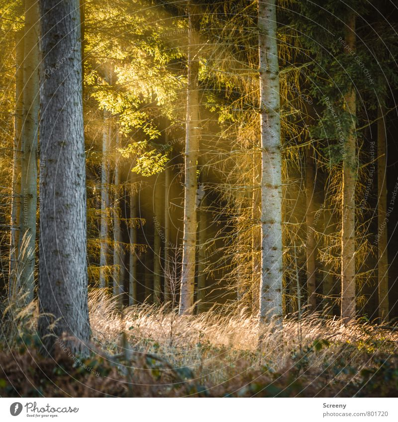 sunrays Nature Landscape Plant Sun Sunlight Spring Summer Tree Grass Bushes Forest Illuminate Growth Hiking Warmth Moody Spring fever Calm Idyll Colour photo