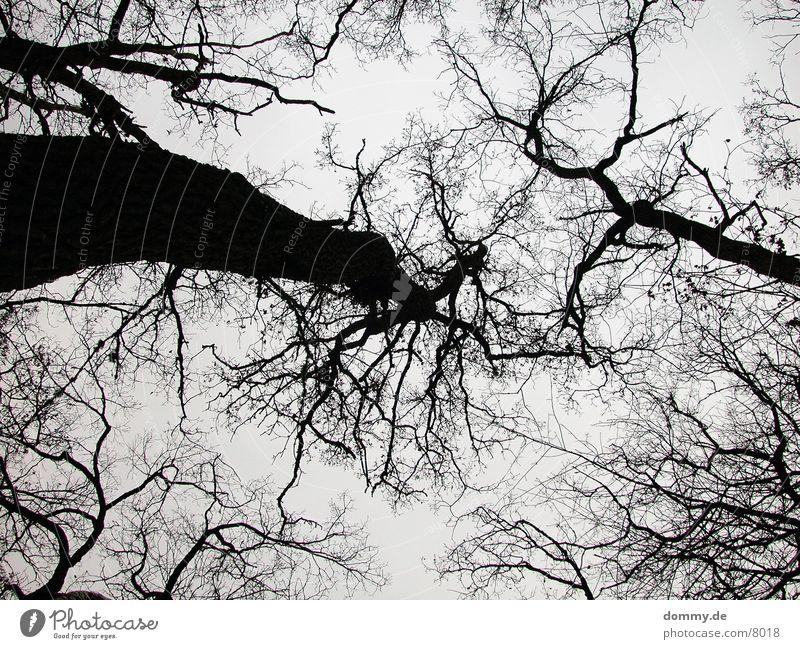 vein Tree Vessel Winter Point Twig kaz