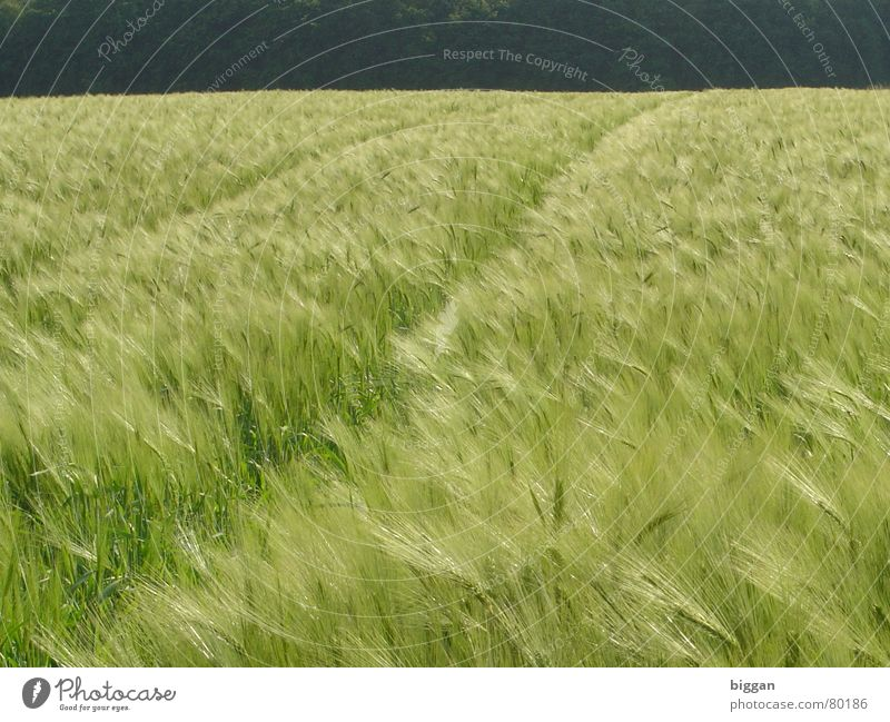 Beautiful Joy Life Dark Freedom Happy Bright Wind Cornfield Memory Recklessness