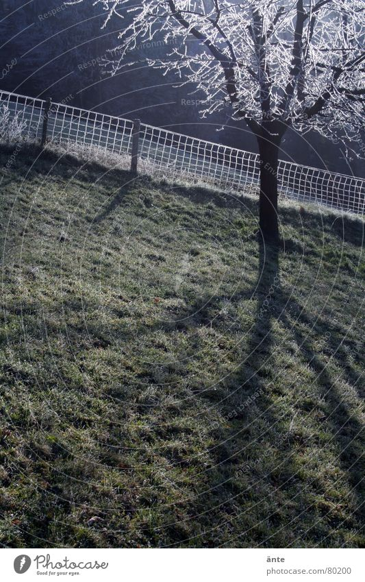 Nature Tree Green Blue Winter Cold Meadow Grass Rope Crazy Fresh Grief Hill Border Pasture Fence