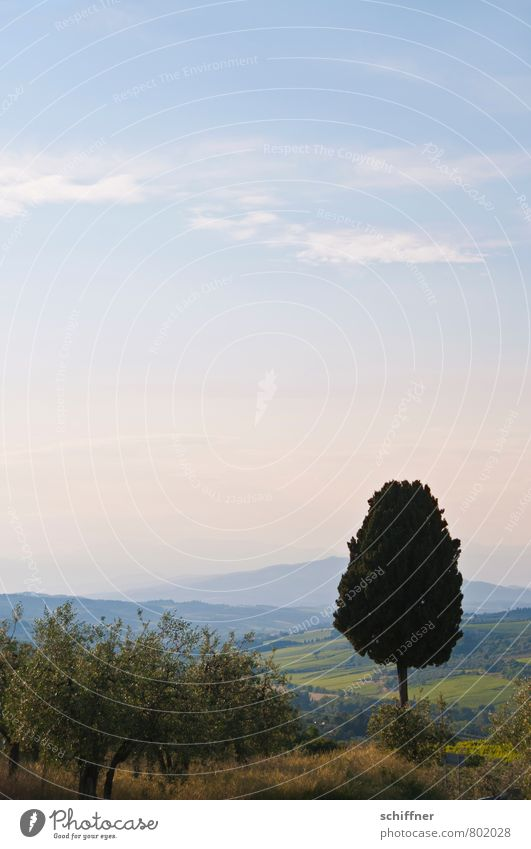 Sky Blue Plant Summer Tree Relaxation Calm Landscape Far-off places Mountain Climate Individual Beautiful weather Italy Hill Tuscany