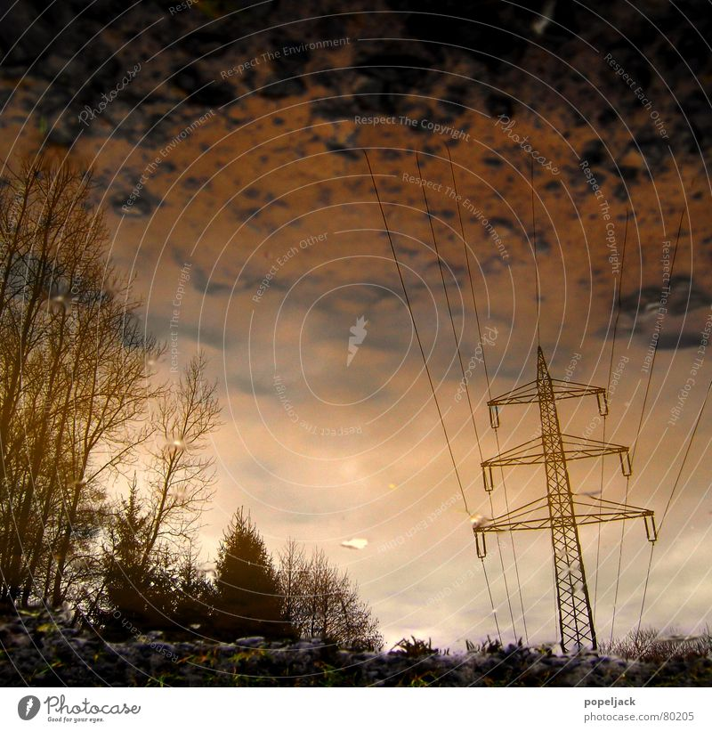 crumbly Electricity Winter Puddle Wet Grass Reflection Mirror Tree Green Sky Paradise Power failure Meadow Green space High voltage power line Energy industry