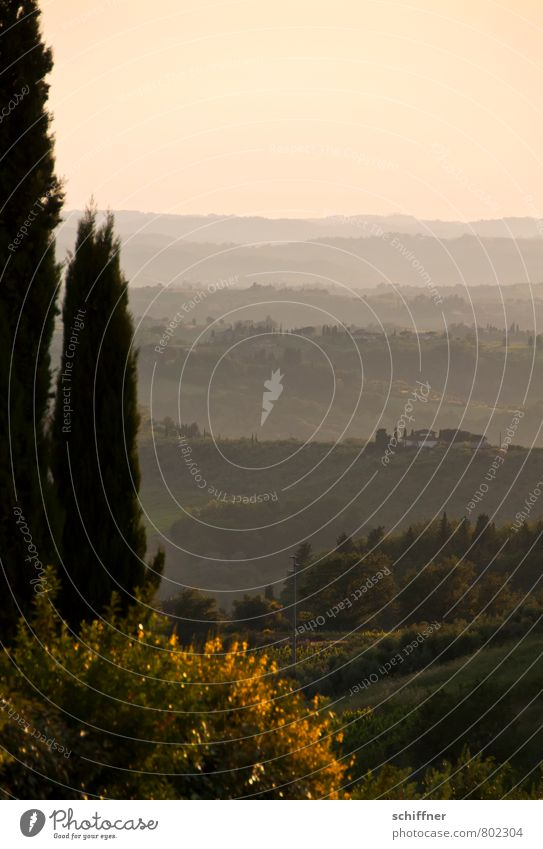 Chianti mio II Environment Nature Landscape Plant Sunrise Sunset Beautiful weather Tree Hill Pink Far-off places Vantage point Tuscany Italy Stone pine Cypress