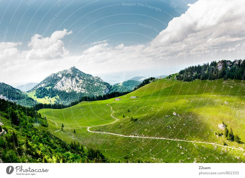 homeland Hiking Environment Nature Landscape Sky Clouds Summer Meadow Forest Alps Mountain Esthetic Sustainability Natural Blue Green Calm Loneliness Relaxation