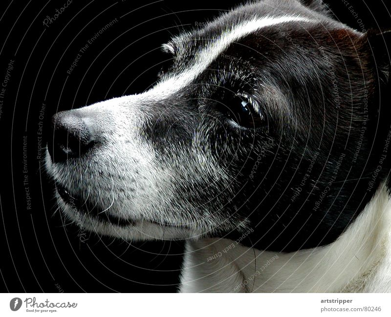 Beautiful Animal Eyes Dog Think Nose Esthetic Electricity Sweet Cute Curiosity Pelt Concentrate Watchfulness Mammal Pet