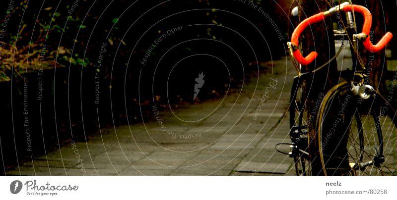 Tree Loneliness Life Movement Bicycle Deer Objective Bicycle handlebars Racing cycle