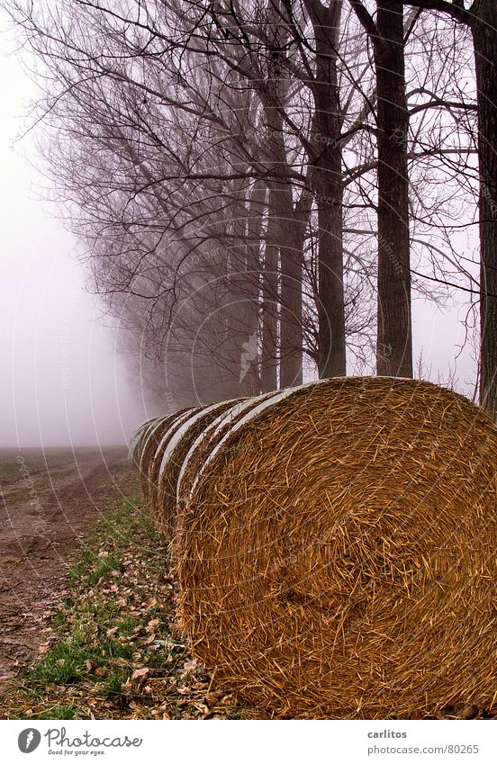Winter Dark Autumn Sadness Fog To go for a walk Boredom Early fall Morning fog Row of trees Roll of straw