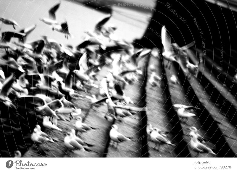 City Black Movement Bird Stairs Group of animals Chaos Dynamics Flock Impulse Mainz