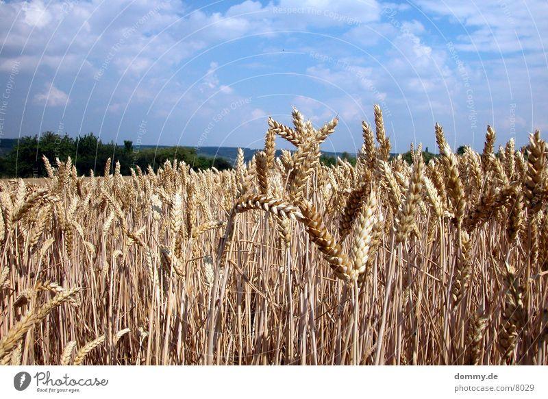 cereals Würzburg Field Grain Americas