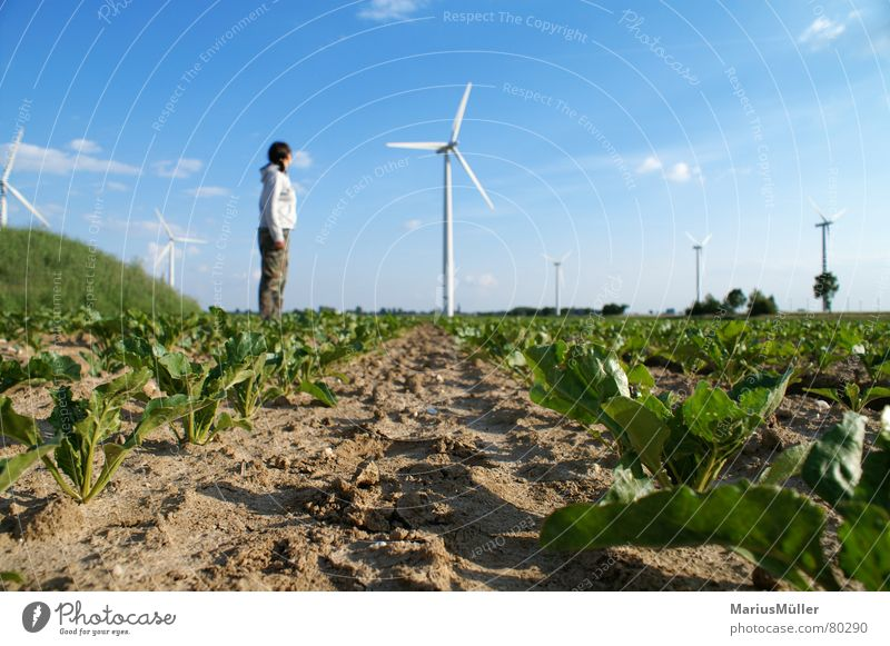 Nature Sky Green Blue Summer Joy Loneliness Spring Field Small Large Earth Wind energy plant Romp Size comparison