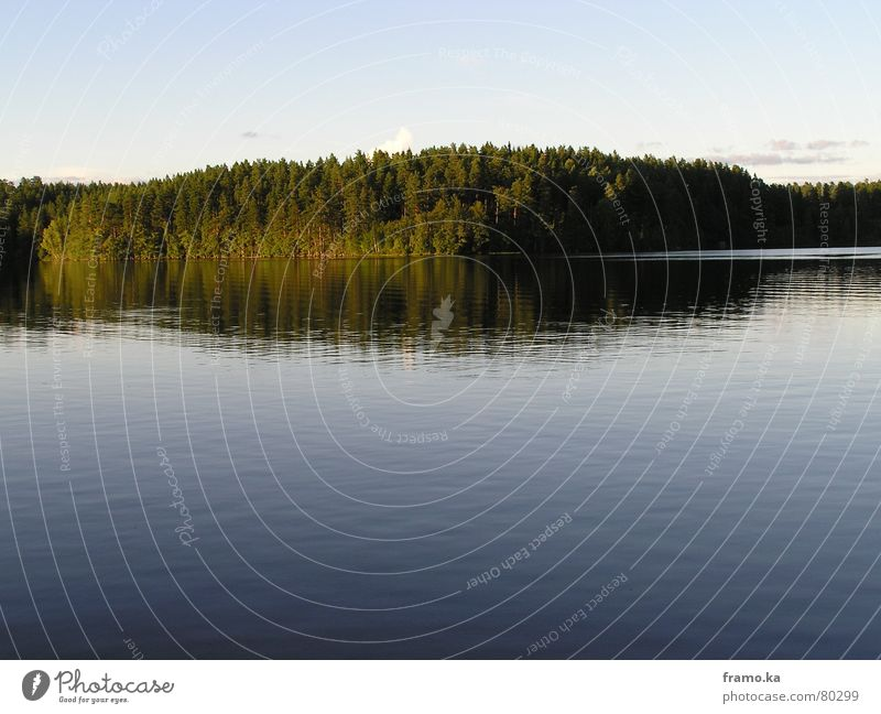 Water Tree Summer Calm Forest Lake Moody Coast