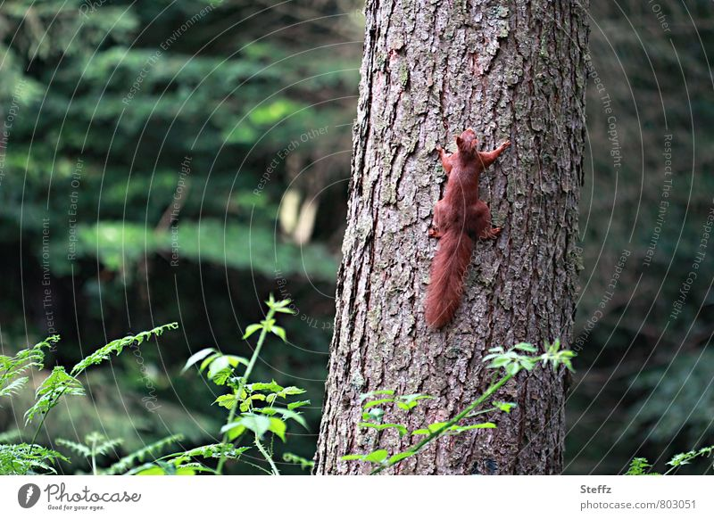 Now hurry up! Nature Animal Summer Tree Tree trunk Tree bark Forest Wild animal Paw Squirrel 1 Running Cute Speed Forest atmosphere Movement Freedom Contentment