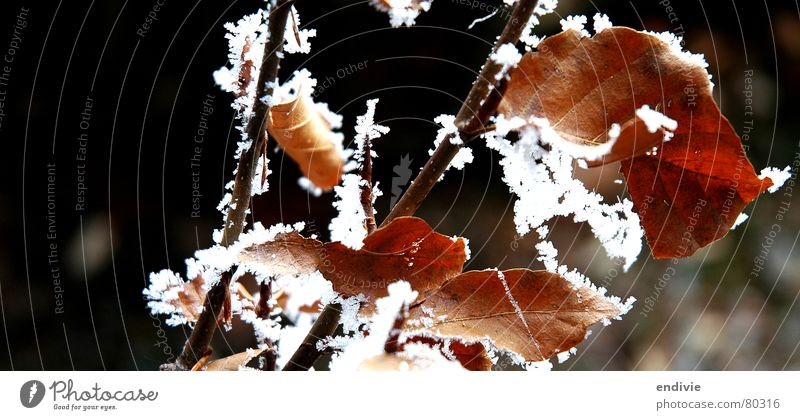Nature Tree Winter Leaf Cold Snow Ice Frost Frozen Twig