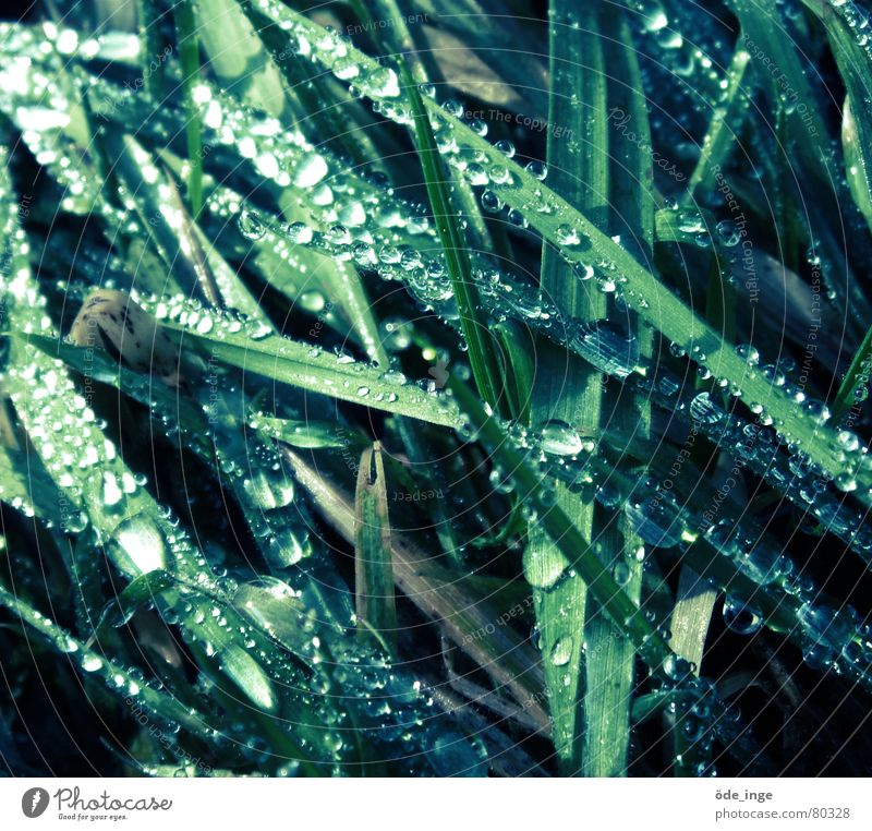 Nature Plant Green Water Winter Cold Meadow Grass Glittering Growth Drops of water Wet Lawn Stalk Fluid Blade of grass