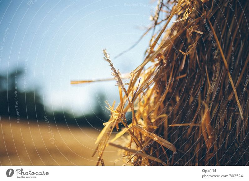 """straw Environment Nature Landscape Summer Beautiful weather Plant Agricultural crop Field Wait Yellow Gold """"Straw Agriculture round bales Harvest agrarian spike"""