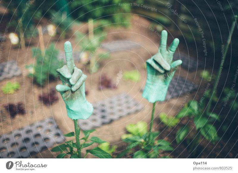 "gardening pleasure Environment Nature Plant Animal Garden Work and employment Green Joy ""Gloves Rubber Fingers Give the finger Gardening plants green thumb"""