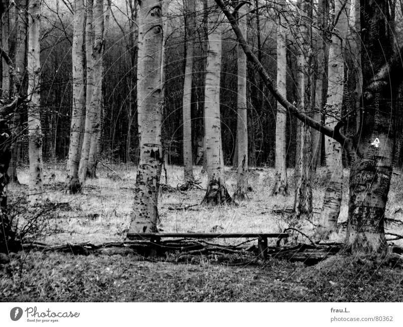 Tree Calm Leaf Loneliness Forest Dark Grass Hiking Bench To go for a walk Leisure and hobbies Creepy Birch tree Harrowing Beech tree Edge of the forest