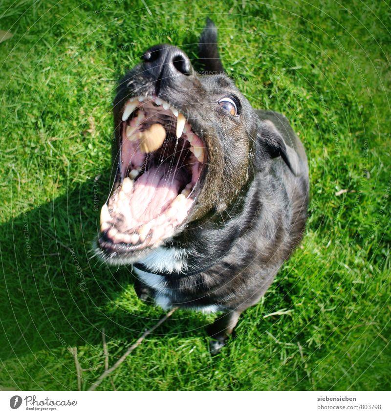 Dog Green Joy Animal Black Life Movement Funny Eating Exceptional Power Beginning Threat Joie de vivre (Vitality) Uniqueness Target