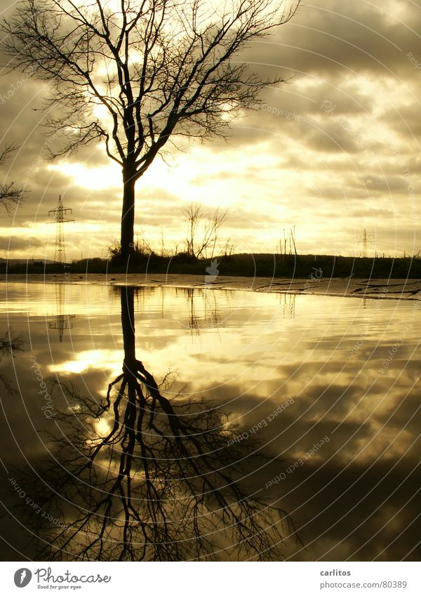Old story, I admit it. Tree Puddle Reflection Clouds Dramatic Wind Passion Electricity Electricity pylon High voltage power line Horizon Middle Symmetry
