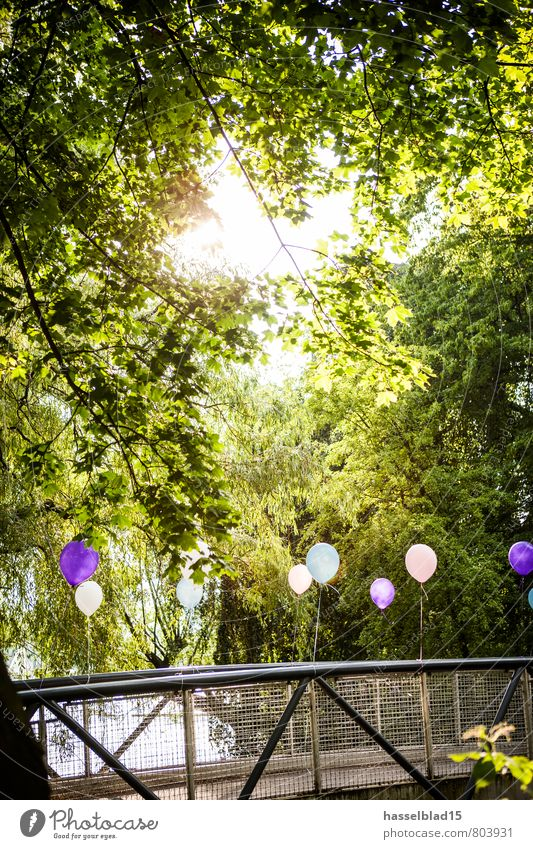 Tree Relaxation Calm Joy Life Style Happy Lifestyle Feasts & Celebrations Party Contentment Birthday Trip Bridge Adventure Balloon