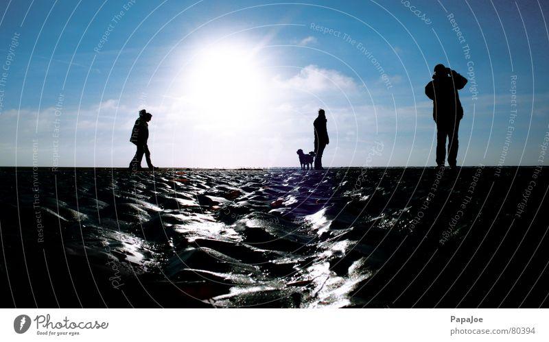 Woman Human being Sky Man Nature Blue Sun Ocean Winter Beach Clouds Animal Dog Cold Environment Coast
