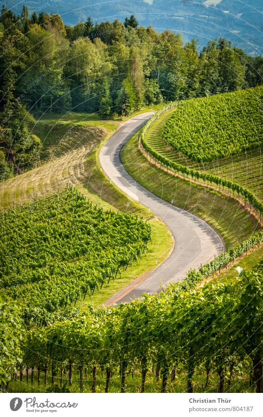 Wine Route (Southern Styria) Relaxation Calm Meditation Vacation & Travel Tourism Trip Freedom Environment Nature Sun Summer Beautiful weather Plant Tree Grass