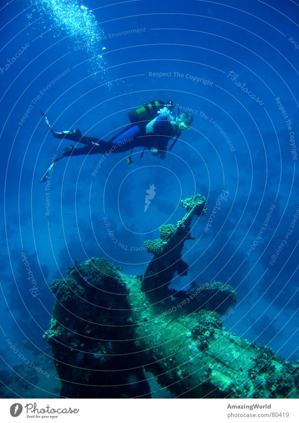 Water Ocean Blue Freedom Dive Infinity Underwater photo Past Historic Deep Aquatics Diver Egypt Sports Wreck