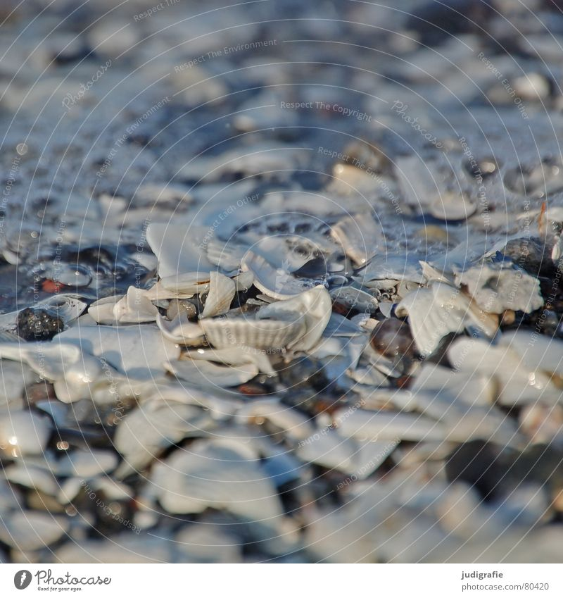 Water Ocean Beach Stone Lake Coast Blow Broken Navigation Baltic Sea Mussel Air bubble Shard Lime Mussel Cockle