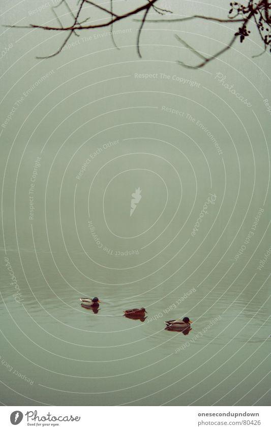 Nature Water Tree Winter Loneliness Dark Cold Landscape Gray Coast Sadness Lake Ice Fog Empty Gloomy