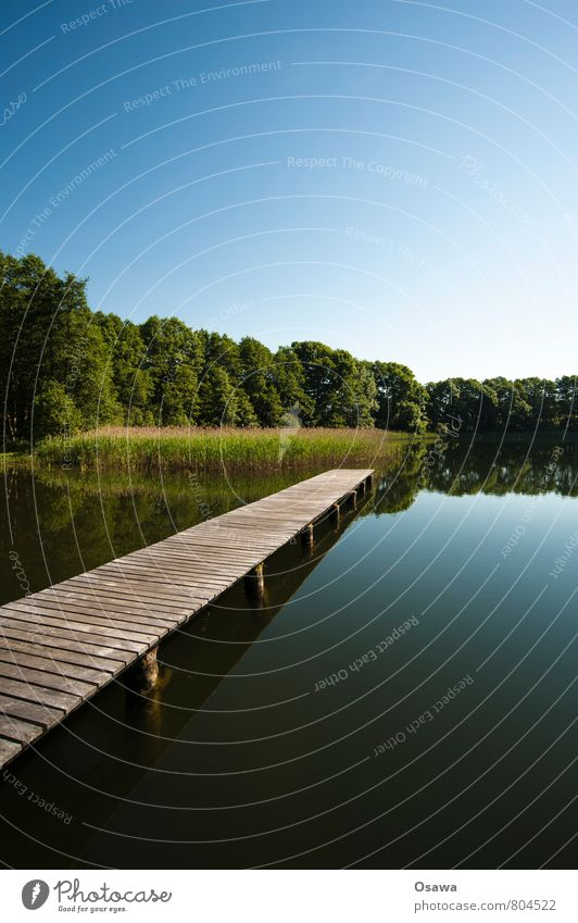 Sky Nature Vacation & Travel Water Tree Relaxation Calm Wood Swimming & Bathing Lake Trip Footbridge