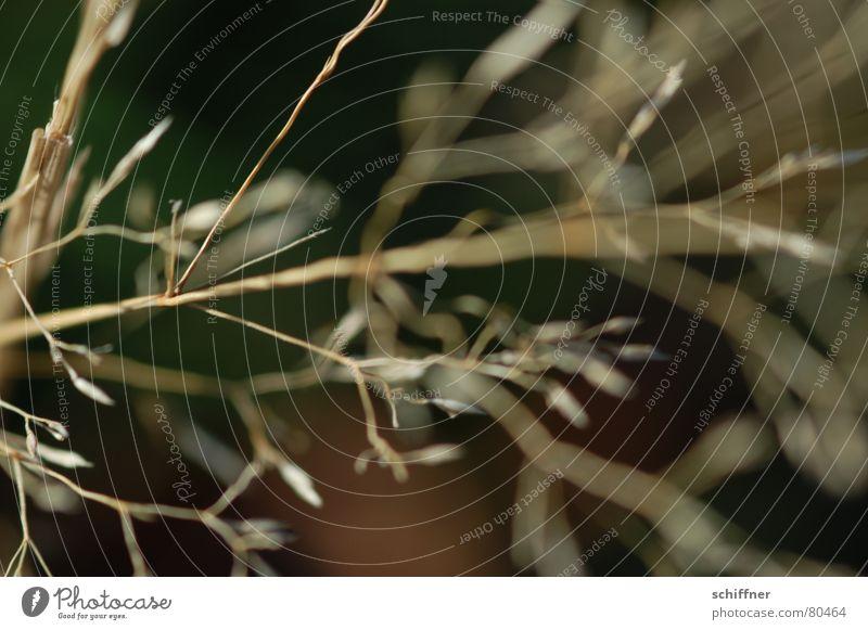 Ocean Winter Meadow Death Grass Wind Crazy Thin Dry Blade of grass Grassland