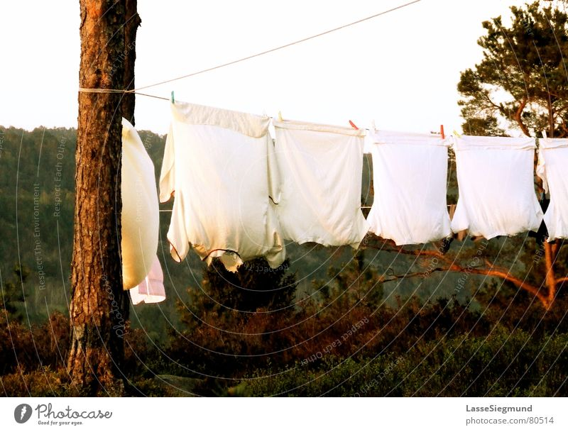 clothesline Shirt Summer Laundry Camping Red Green Norway Dry Cloth T-shirt Clothesline Wilderness Clothing Living or residing Wind Nature Pine Dusk Idyll