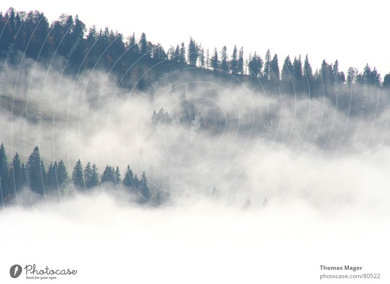fogged in Fog Forest Far-off places Clouds Tree Easy Hill Shroud of fog Vantage point Coniferous forest Mountain Looking Perspective Level