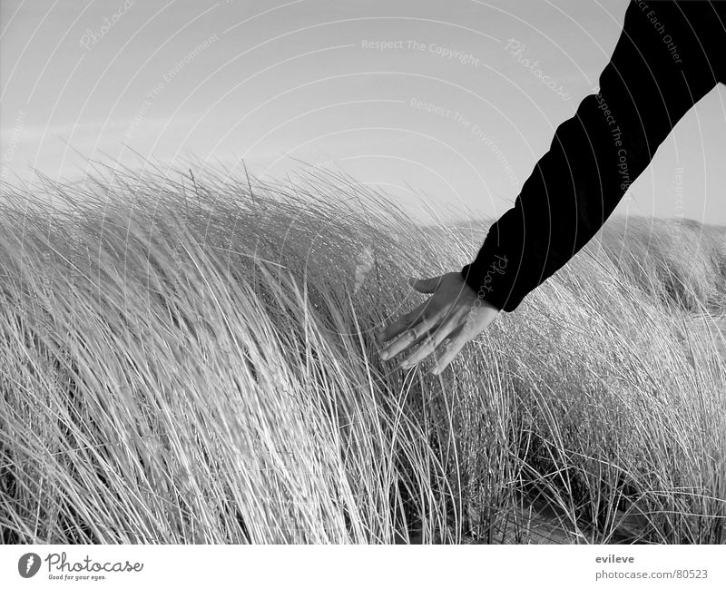 stroking the grass Grass Hand Meadow Underarm Ease Touch Going Maturing time Calm Light heartedness Environment Sylt Close-up Beautiful weather Stripe